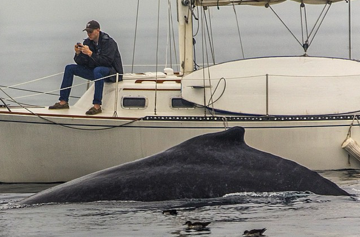 Missed-Whale-Because-Of-Smartphone-Obsession.png